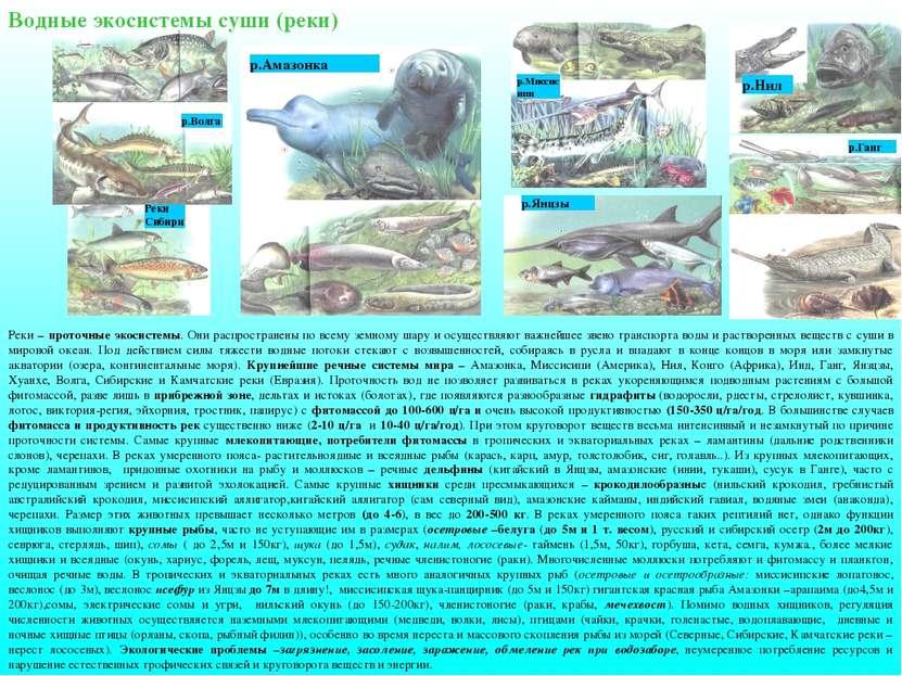 Водные экосистемы суши (реки) Реки – проточные экосистемы. Они распространены...