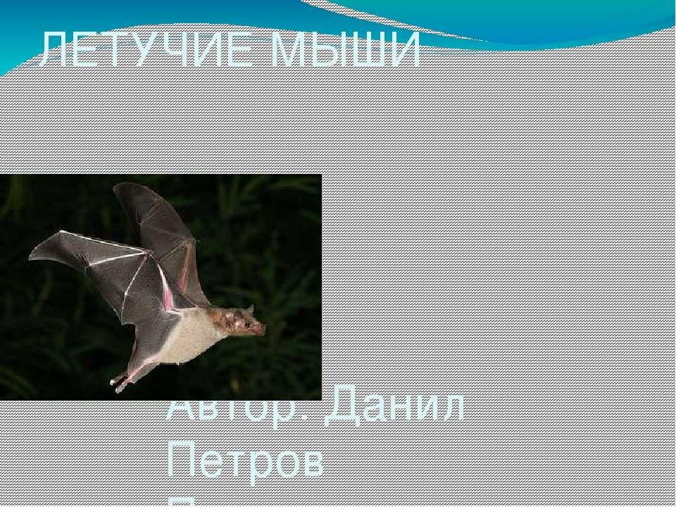 ЛЕТУЧИЕ МЫШИ Автор: Данил Петров Преподаватель: Наталья Александровна