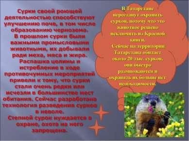 В Татарстане перестанут охранять сурков, потому что это животное решено исклю...