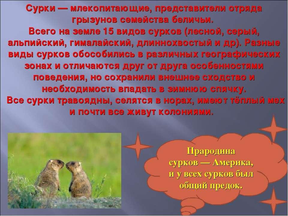 Сурки — млекопитающие, представители отряда грызунов семейства беличьи. Всего...