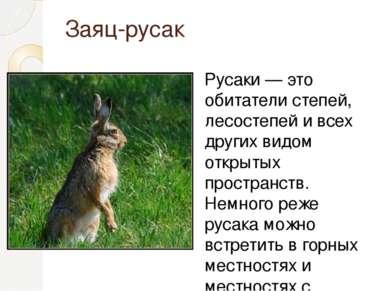Заяц-русак Русаки — это обитатели степей, лесостепей и всех других видом откр...
