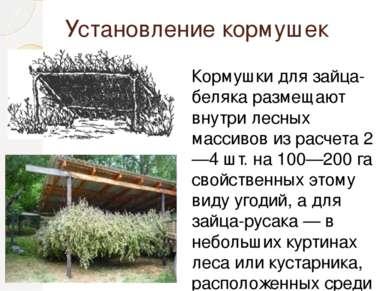Установление кормушек Кормушки для зайца-беляка размещают внутри лесных масси...