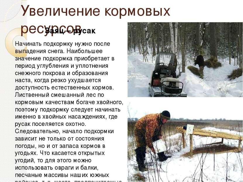 Увеличение кормовых ресурсов Заяц – русак Начинать подкормку нужно после выпа...