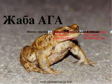 Жаба АГА http://prezentacija.biz/