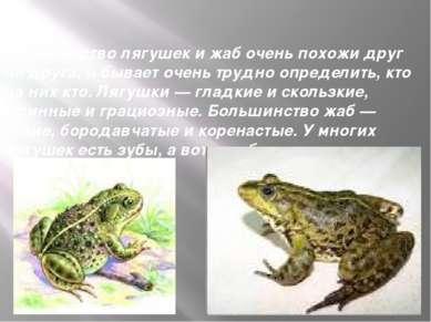Большинство лягушек и жаб очень похожи друг на друга, и бывает очень трудно о...