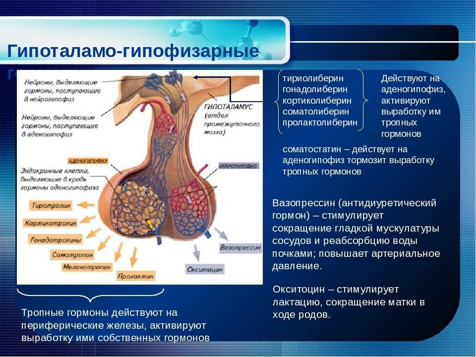 Гипоталамо-гипофизарные гормоны тириолиберин гонадолиберин кортиколиберин сом...