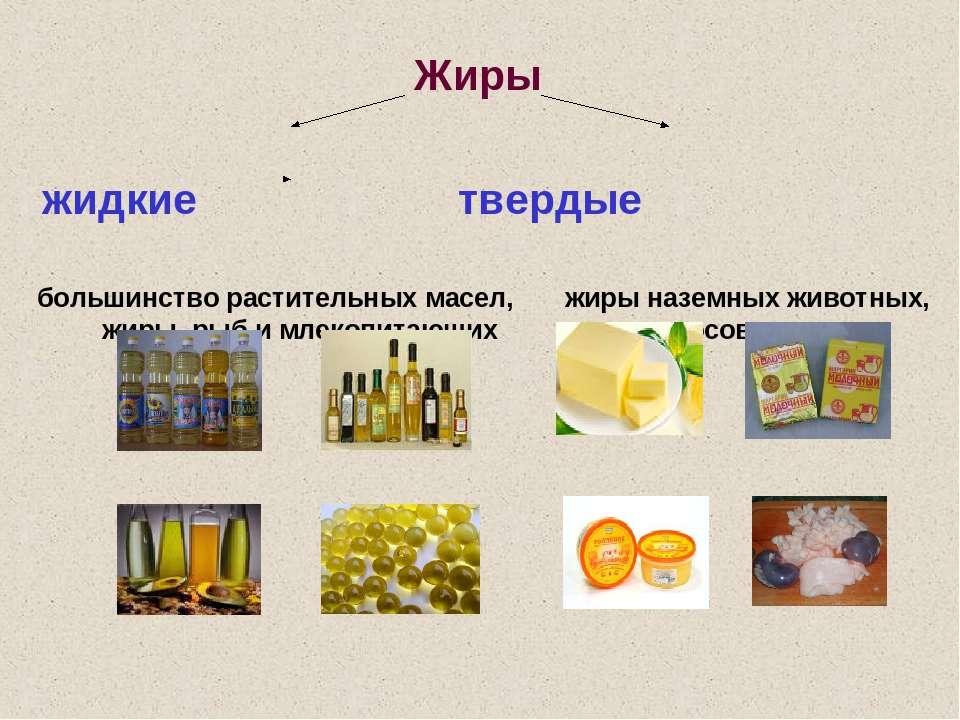 Жиры жидкие твердые большинство растительных масел, жиры наземных животных, ж...