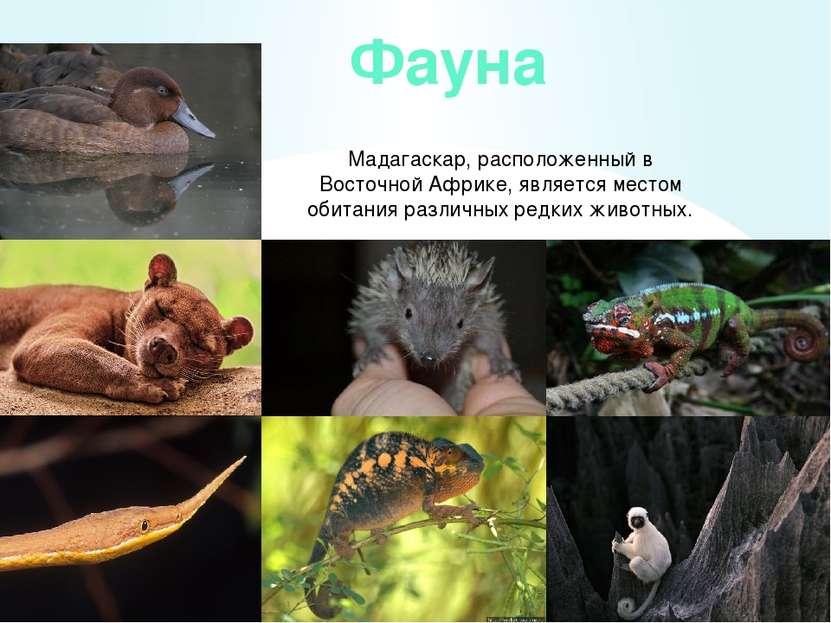животные мадагаскара презентация