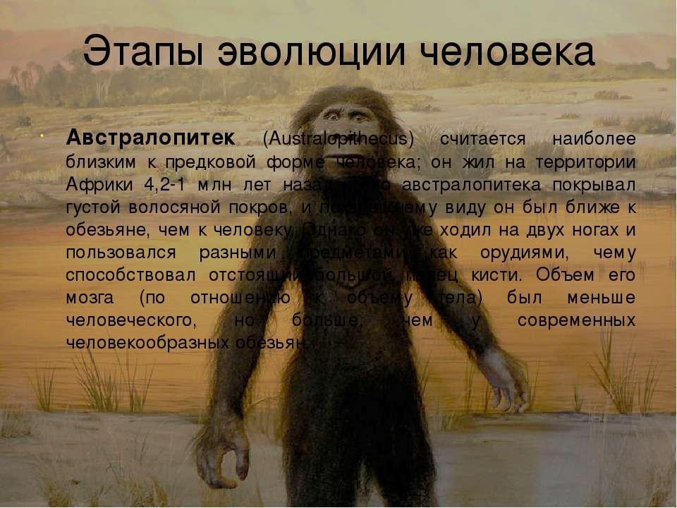 По биологии эволюция приматов