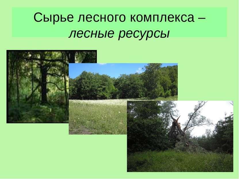 Сырье лесного комплекса – лесные ресурсы