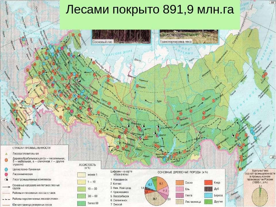 Лесами покрыто 891,9 млн.га