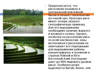 Предполагается, что рисосеяние возникло в центральном или южном Китае в начал...