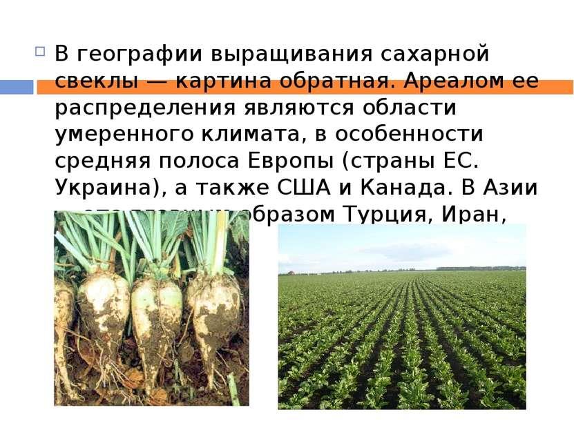 В географии выращивания сахарной свеклы — картина обратная. Ареалом ее распре...