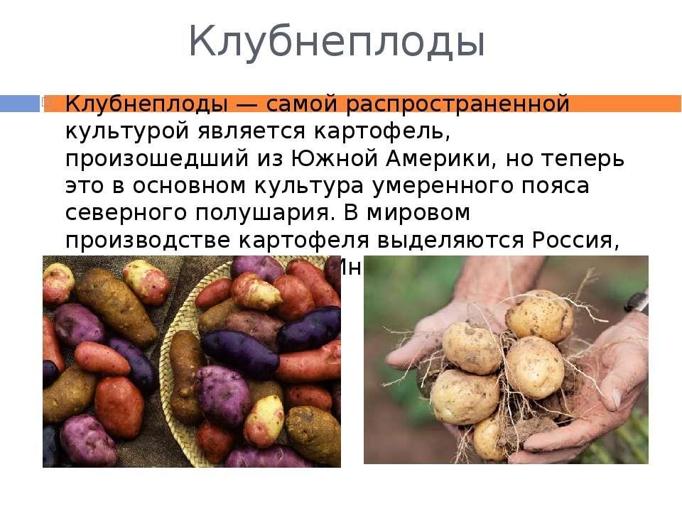 Клубнеплоды Клубнеплоды — самой распространенной культурой является картофель...
