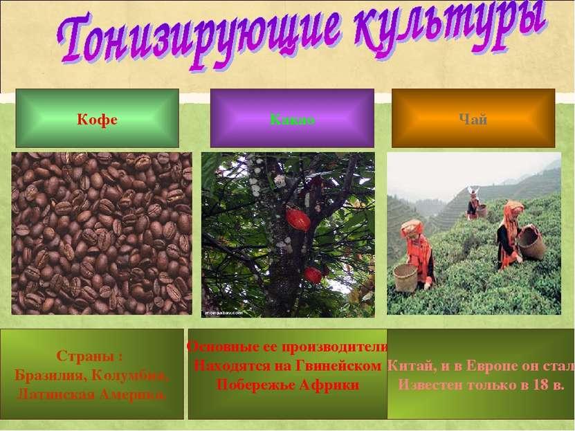Кофе Какао Чай Страны : Бразилия, Колумбия, Латинская Америка. Основные ее пр...