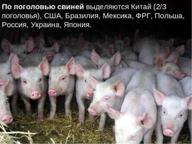 По поголовью свиней выделяются Китай (2/3 поголовья), США, Бразилия, Мексика,...