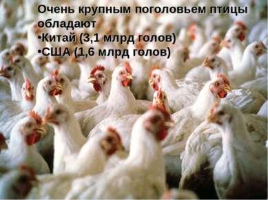 Очень крупным поголовьем птицы обладают Китай (3,1 млрд голов) США (1,6 млрд ...