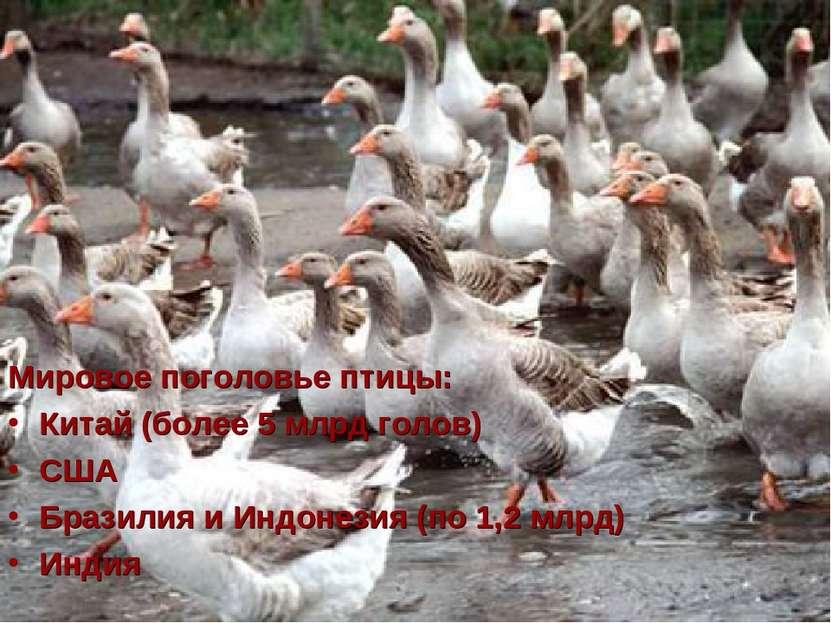 Мировое поголовье птицы: Китай (более 5 млрд голов) США Бразилия и Индонезия ...