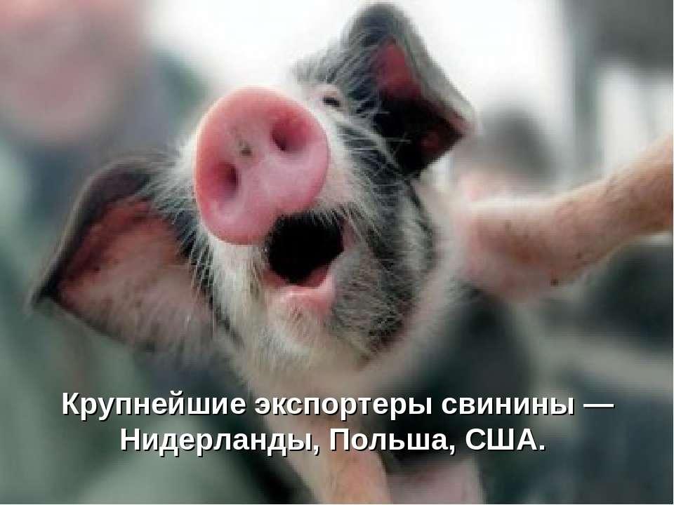 Крупнейшие экспортеры свинины — Нидерланды, Польша, США.