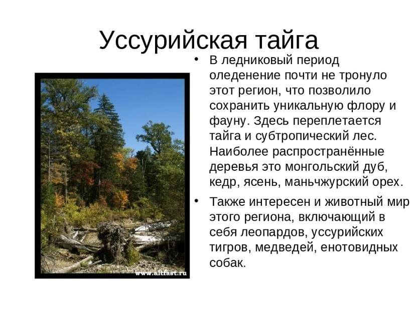 Уссурийская тайга В ледниковый период оледенение почти не тронуло этот регион...