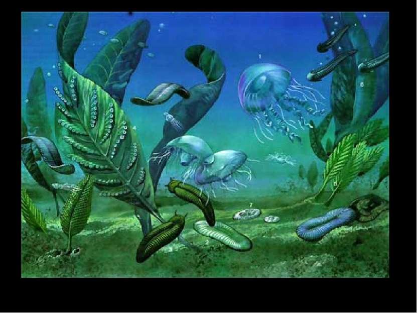 """Конец протерозоя называют """"веком медуз""""."""
