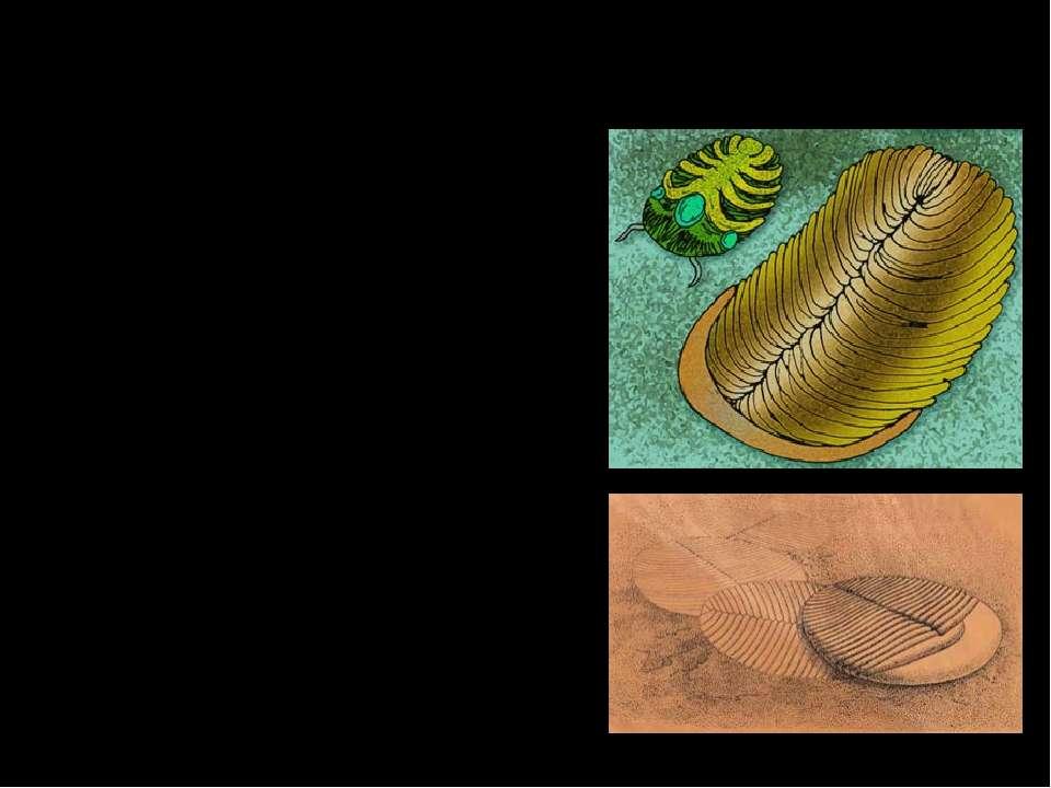 Ёргия. Ёргии питались органическим детритом и бактериями, которые плотной сли...