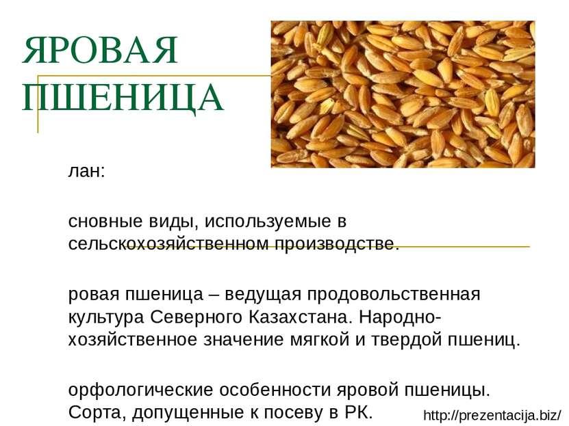 ЯРОВАЯ ПШЕНИЦА План: Основные виды, используемые в сельскохозяйственном произ...