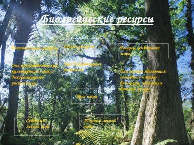 Биологические ресурсы Растительные ресурсы Они представлены как культурными, ...