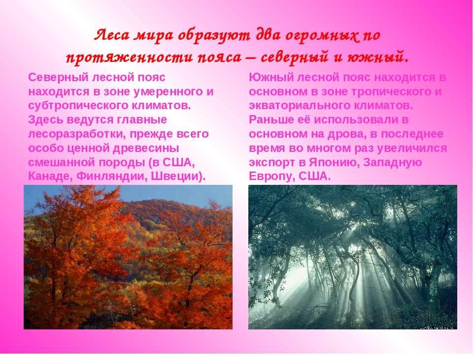 Леса мира образуют два огромных по протяженности пояса – северный и южный. Се...