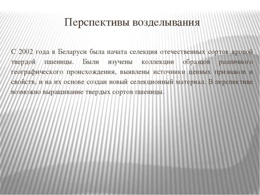 Перспективы возделывания С 2002 года в Беларуси была начата селекция отечеств...