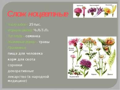 Сложноцветные Число видов – 25тыс. Формула цветка: Ч5Л5Т5П1 Тип плода – семян...