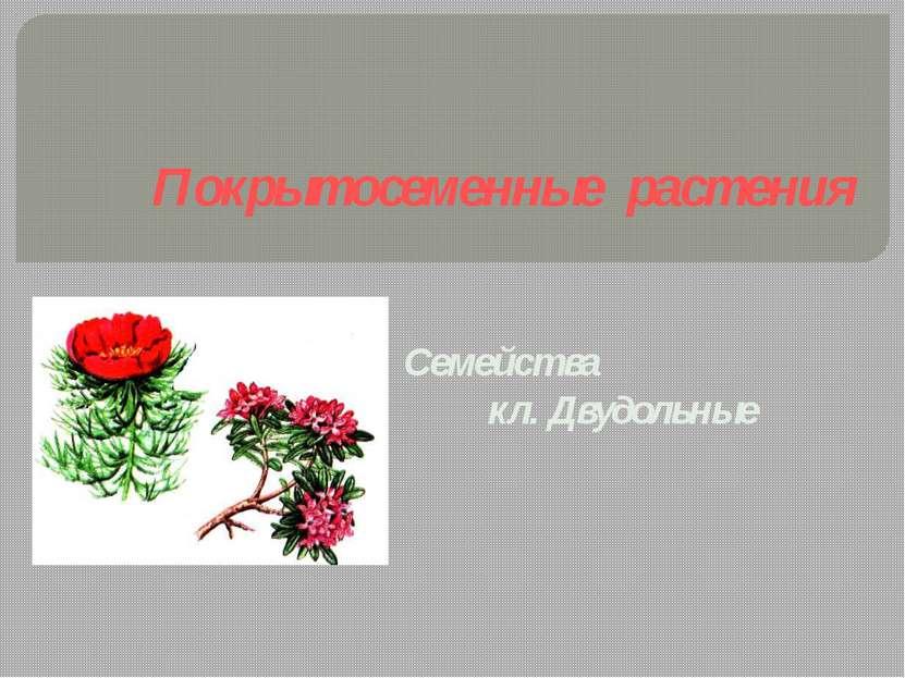 Покрытосеменные растения Семейства кл. Двудольные