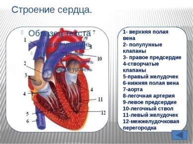 Количество сокращений сердца В ЗАВИСИМОСТИ ОТ ВОЗРАСТА. ВОЗРАСТ. КОЛИЧЕСТВО С...