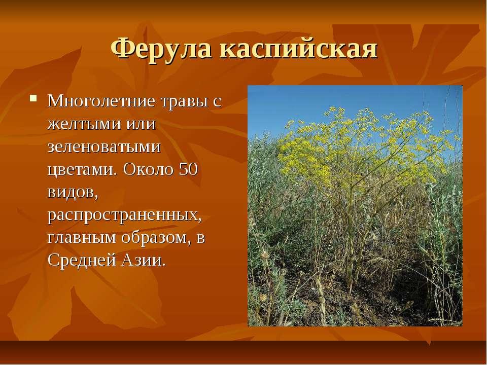 Ферула каспийская Многолетние травы с желтыми или зеленоватыми цветами. Около...