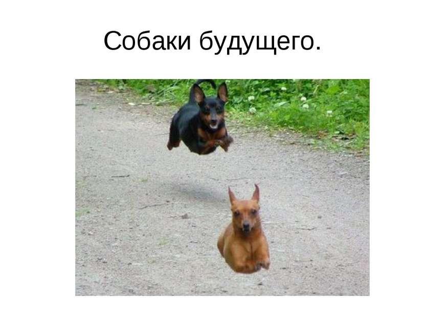 Собаки будущего.