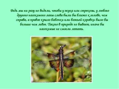 Ведь мы ни разу не видели, чтобы у жука или стрекозы, у любого другого насеко...