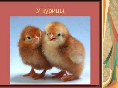 У курицы