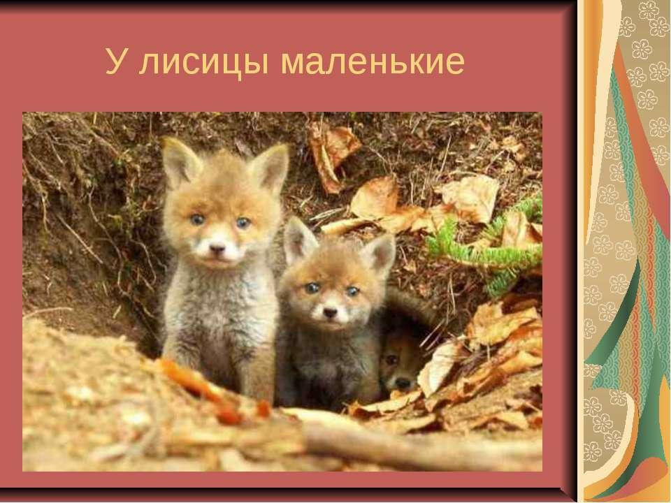 У лисицы маленькие