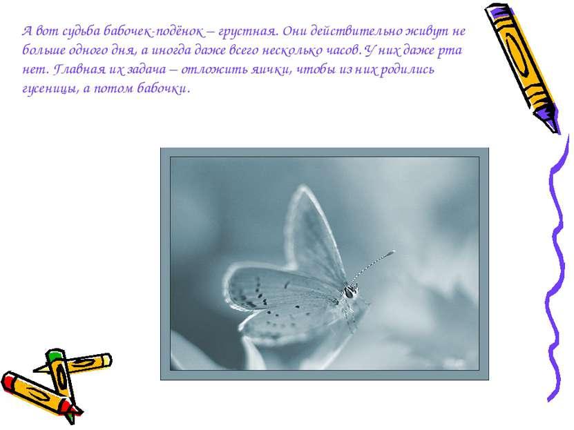 А вот судьба бабочек-подёнок – грустная. Они действительно живут не больше од...
