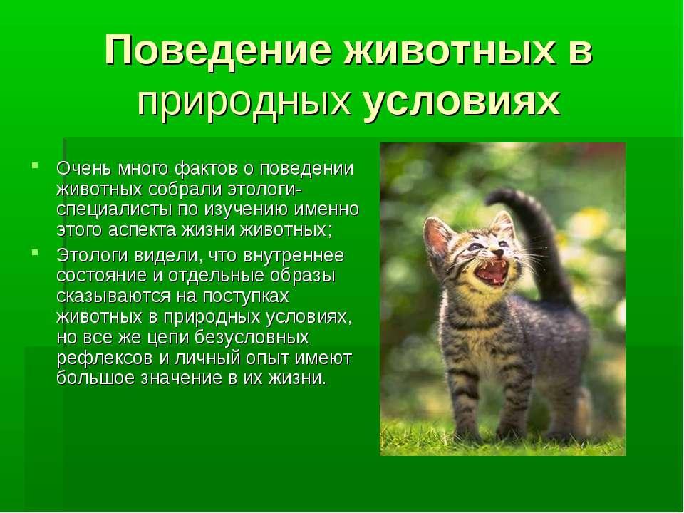 Поведение животных в природных условиях Очень много фактов о поведении животн...