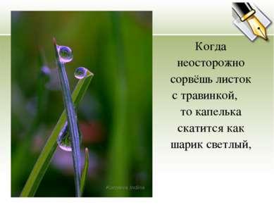 Когда неосторожно сорвёшь листок с травинкой, то капелька скатится как шарик ...