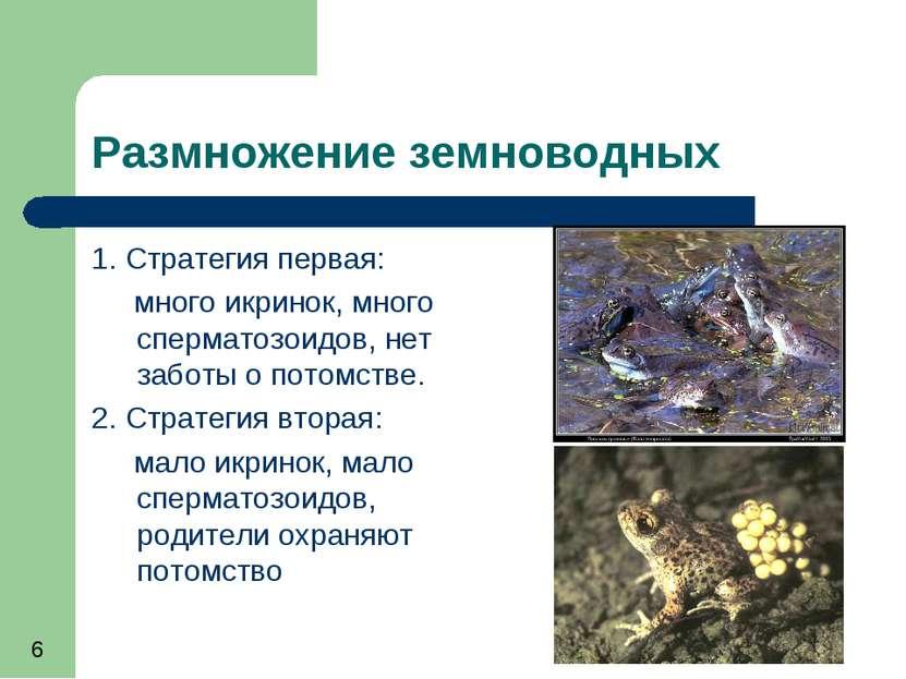 Размножение земноводных 1. Стратегия первая: много икринок, много сперматозои...