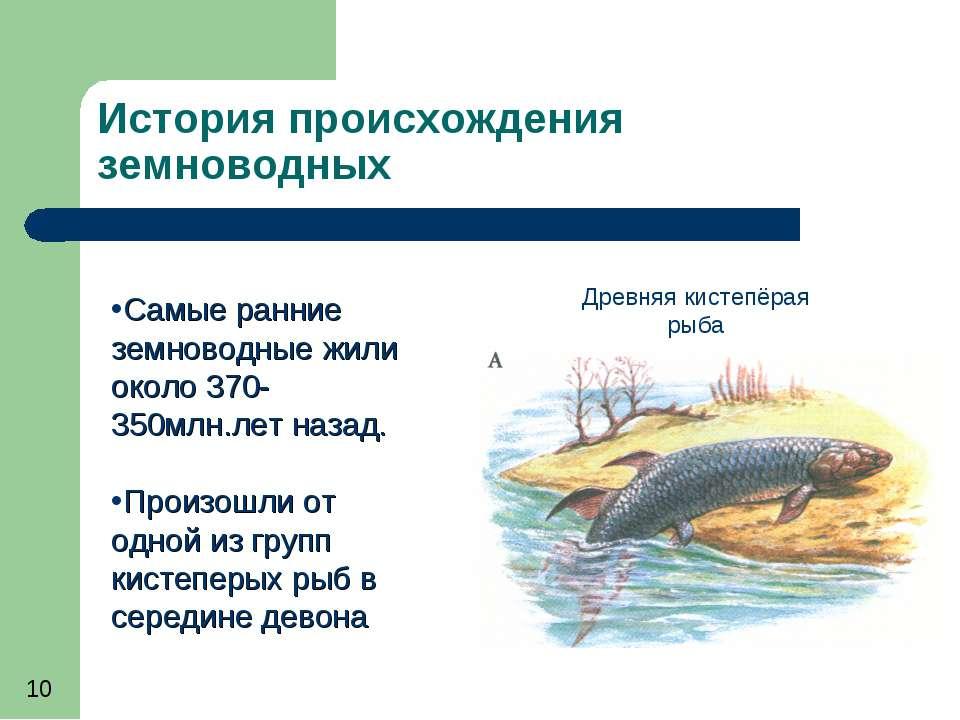 История происхождения земноводных Самые ранние земноводные жили около 370-350...