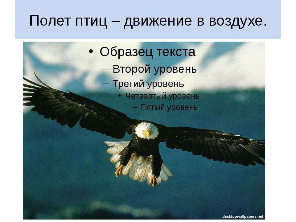 Полет птиц – движение в воздухе.