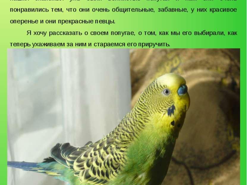 Введение Многие люди, которые хотят быть поближе к природе, держат попугаев. ...