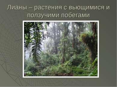 Лианы – растения с вьющимися и ползучими побегами