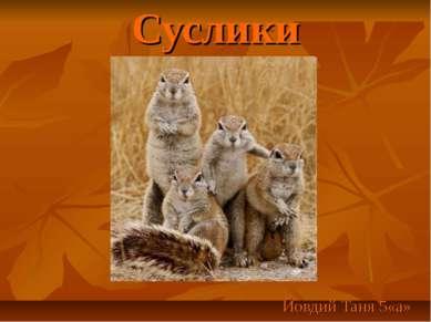 Суслики Йовдий Таня 5«а»
