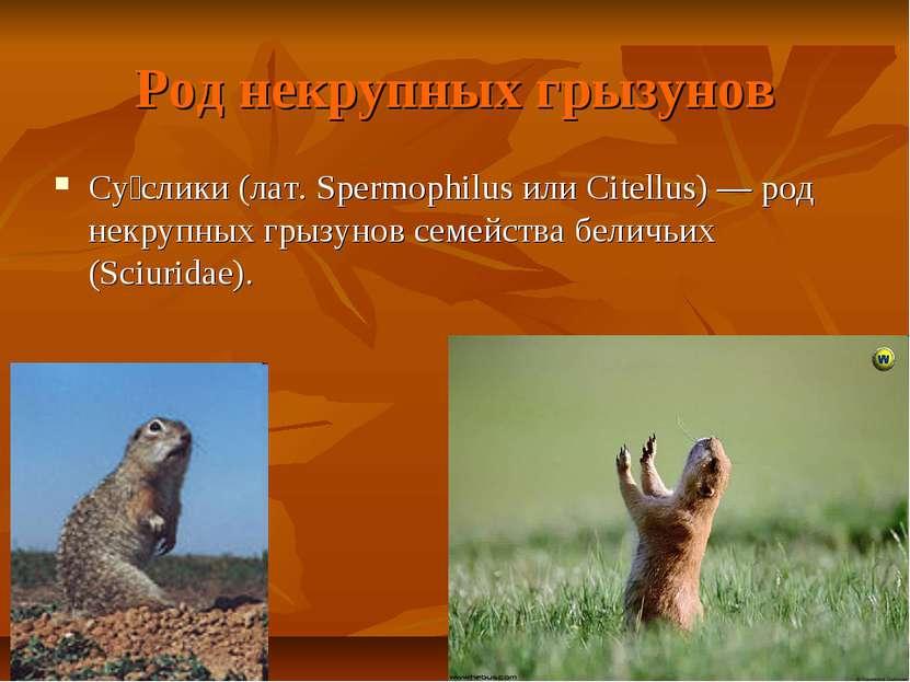 Род некрупных грызунов Су слики (лат. Spermophilus или Citellus) — род некруп...