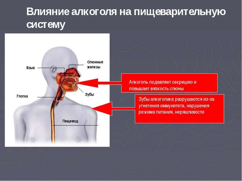 Алкоголь подавляет секрецию и повышает вязкость слюны Зубы алкоголика разруша...