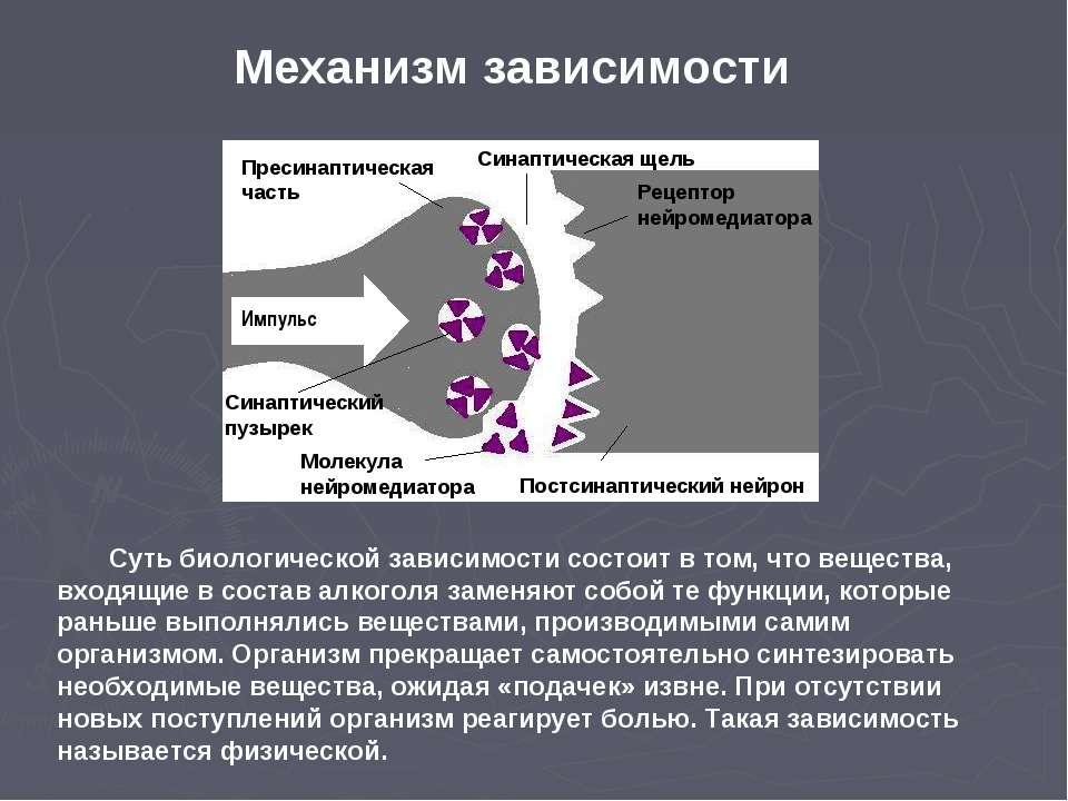 Импульс Синаптический пузырек Пресинаптическая часть Рецептор нейромедиатора ...